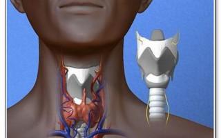 искусственные органы