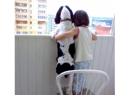 Курсы психотерапевтов для собак
